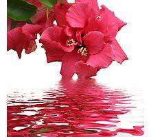 Beauty of Hibiscus Photographic Print