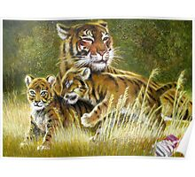 Tiger with cubs Poster