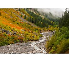 Fall Color in Stevens Canyon Photographic Print