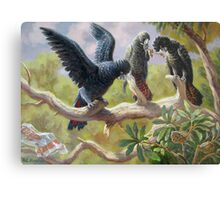 Black Red-tail parrots Metal Print