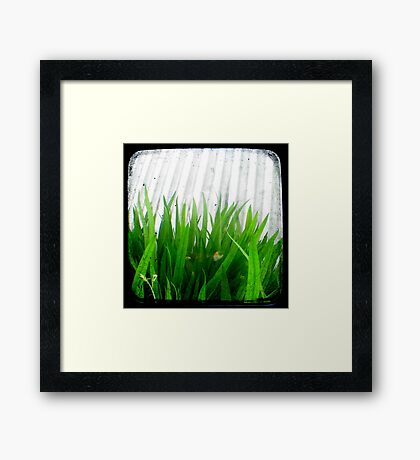 Green Green Grass Framed Print