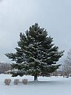 Snow Tree by FrankieCat