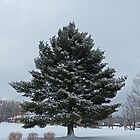 Snow Tree by Susan S. Kline