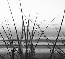 Black & White Beach by Brad Walker