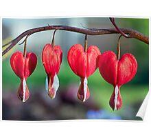 Bleeding Hearts Quartet Poster