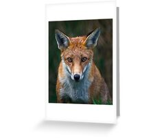 Red Fox Portrait Greeting Card