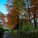 Autumn Lane by RosaMarieAshby