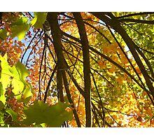 Autumn Leaves Photographic Print