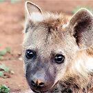 JUST STARING, THE BABY  Spotted Hyaena - Crocuta crocuta by Magriet Meintjes