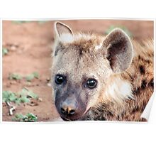 JUST STARING, THE BABY  Spotted Hyaena - Crocuta crocuta Poster
