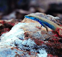 Toxic lizard. by evekaczmarska