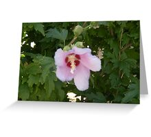Flower in the green! Greeting Card