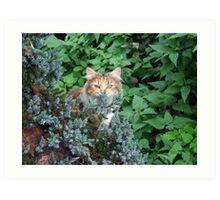 Lovely Cat, name Princess Art Print
