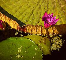 Japanese Garden II.  by Sherstin Schwartz