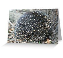 Native Echidna Greeting Card