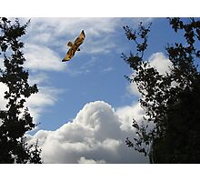A Gift From Above Photographic Print