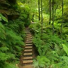 Pathway of ferns by Michael Matthews