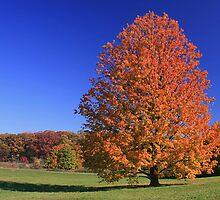 Orange You A Beauty by John Absher
