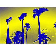 Yellow Palm Trees Photographic Print
