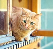 Rustic cat sitting behind a wooden house  by Oksana Ariskina