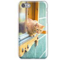 orange cat in the window iPhone Case/Skin