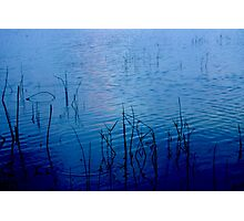 Reeds in blue Photographic Print