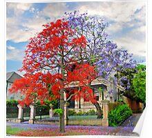 Illawarra Flame tree & Jacaranda Poster