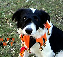 Champs 1st Halloween by Glenna Walker