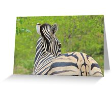 Zebra Colors - Patterns in Nature Greeting Card