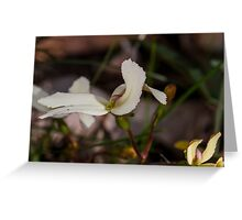 Cow Kicks (Stylidium schoeoides) Greeting Card