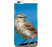 New Zealand Pipit iPhone Case/Skin