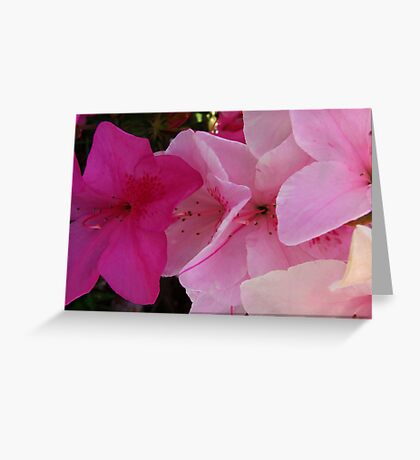 """""""Two Toned"""" Greeting Card"""