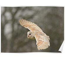 Barn owl in the rain Poster