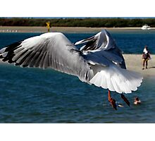 """""""Hovering About""""..At Surfers Paradise.. Photographic Print"""