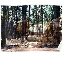 Overlaid pine plantation Poster
