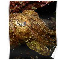 Underwater Comilion Poster