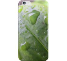 Water droplet on leaf close up 2 iPhone Case/Skin