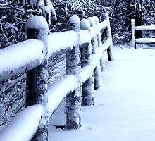Snow on Fence by Don White