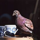 Pigeon in Manchester  by Adam Irving