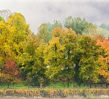 Autumn colors in a misty morning by MarcoSaracco