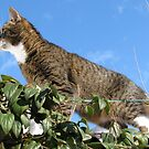 Mishu Checking Out the Bird Feeder by Dennis Melling