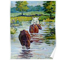 Cows in Linden Pond Poster