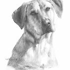 yellow lab in shadow by Mike Theuer