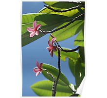 St lucian Floral Poster