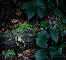 Hidden Treasures by Ann Garrett