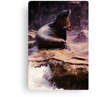 California Sea Lion on Rock Canvas Print