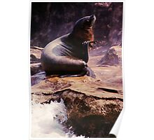 California Sea Lion on Rock Poster