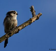 Long tailed tit by Slinky2012