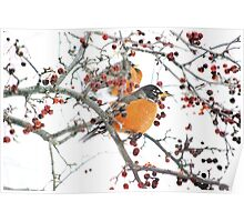 Robins in winter #2 Poster