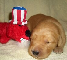 "week old golden ""firecracker"" puppy by goldnzrule"